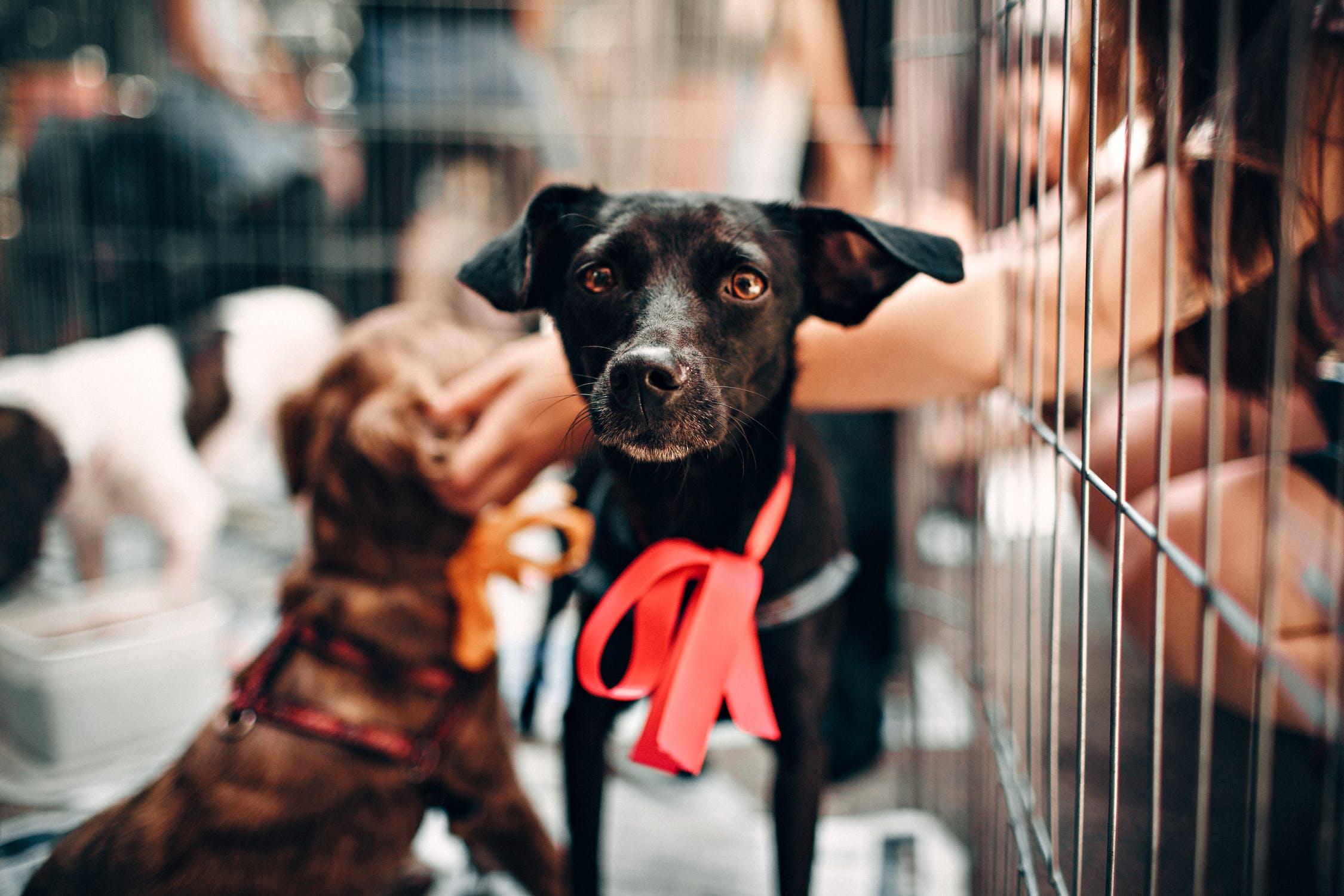 Bild på hundar i bur